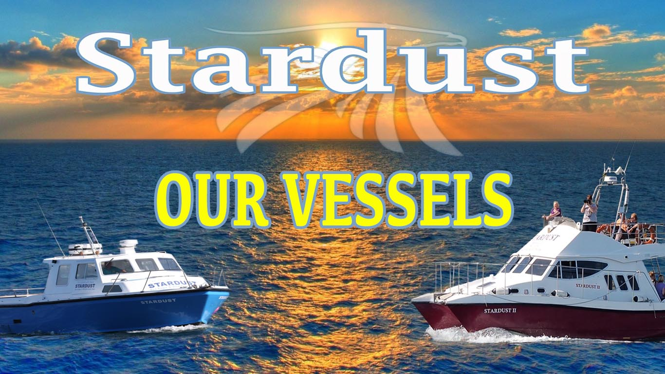 OUR VESSELS