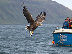 Sea Eagle Portree
